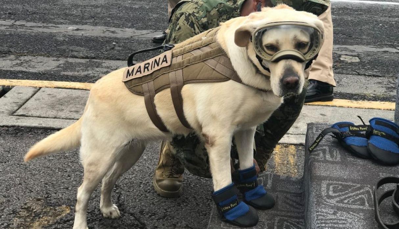 Frida, la perrita rescatista, se retira