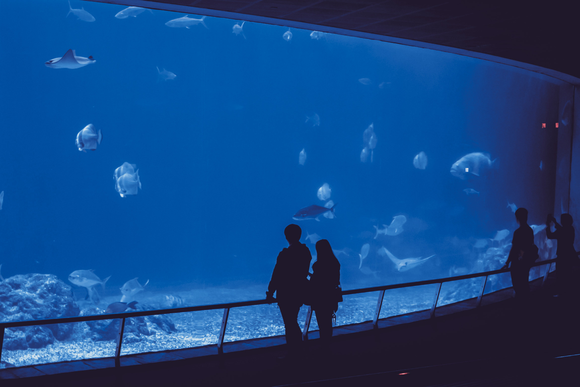 """""""Michin"""": el acuario más grande de México que te dejará cautivo"""
