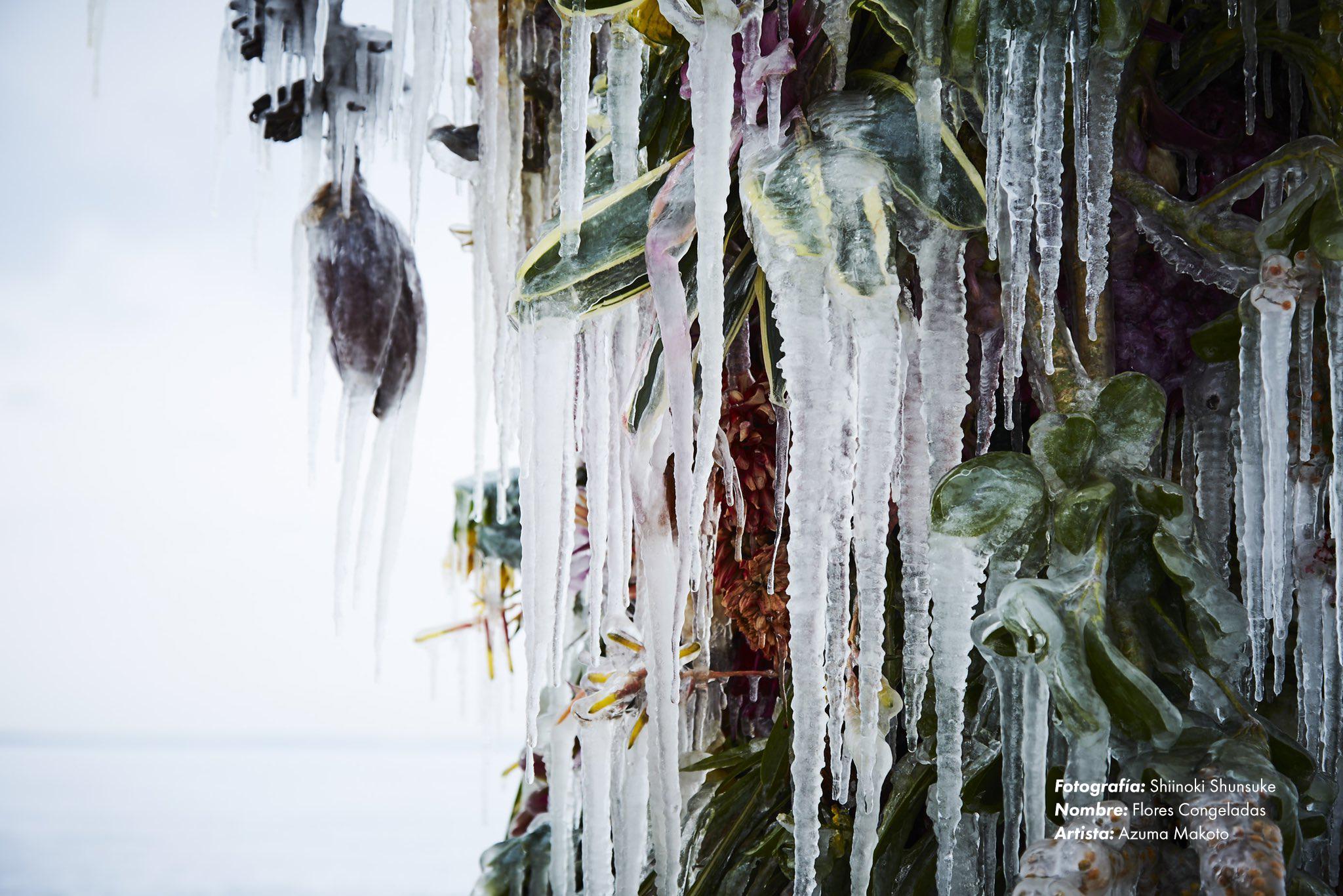 En flores congeladas, Azuma Makoto usa hielo para preservar las instalaciones florales.